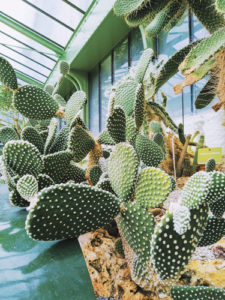 photo jardin des plantes cactus paris