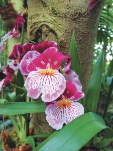 photo jardin des plantes orchidée paris